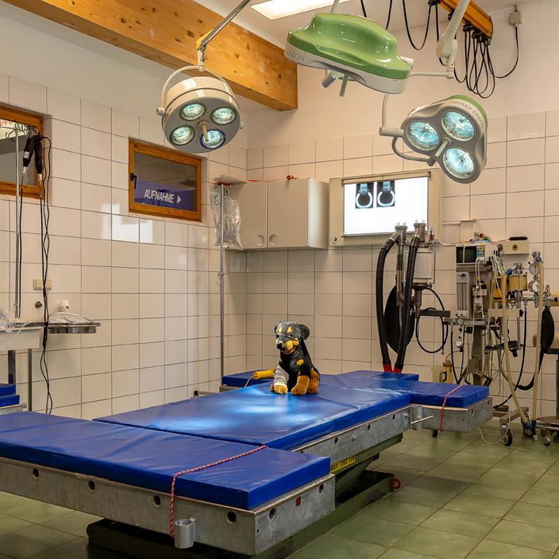 Behandlungsraum für Pferde